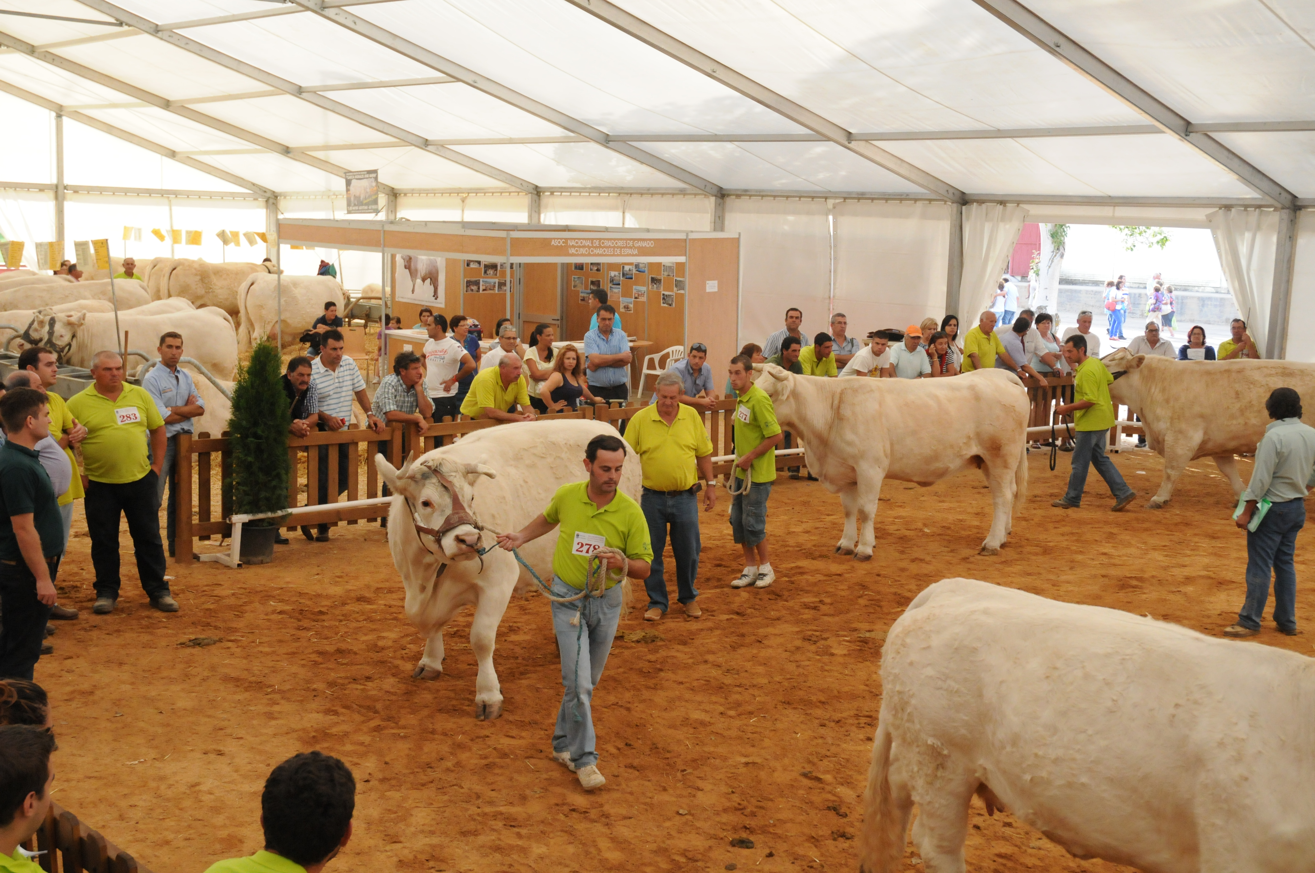 Concurso Ganado Agromaq Salamanca 2012