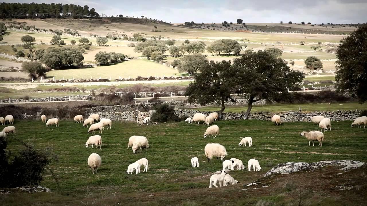 queso-zamorano-paisaje-zamora